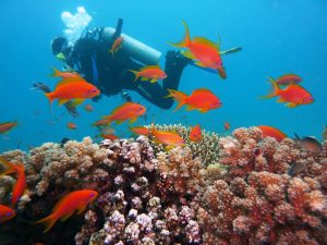 scuba diver exploring the reef